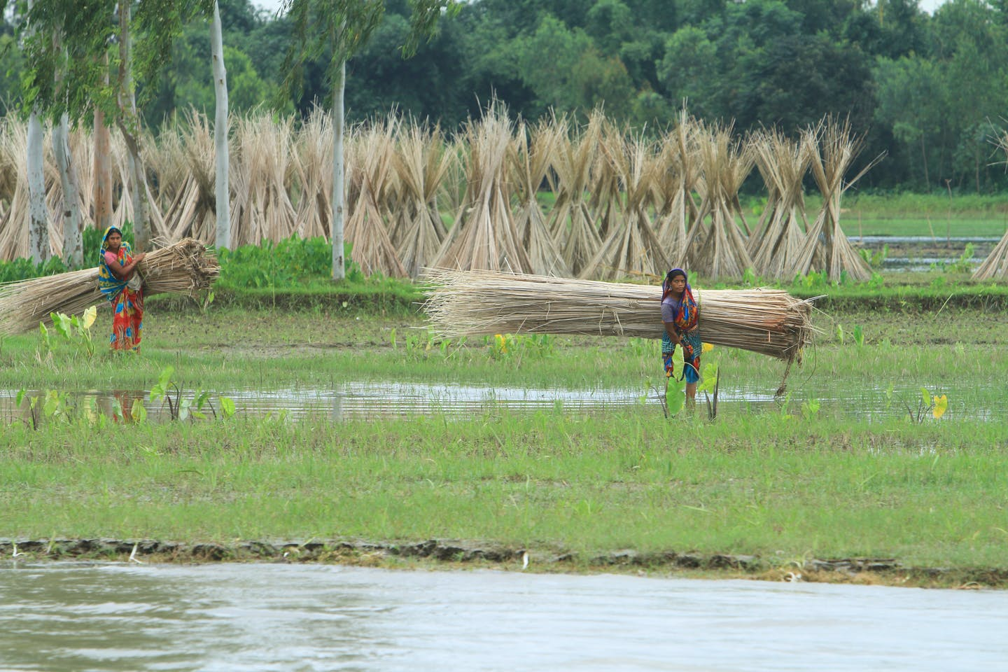 farmers in Bangladesh