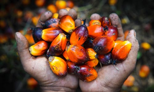 Agribusiness giants ADM, Bunge trading in 'conflict' palm oil, new human rights report says