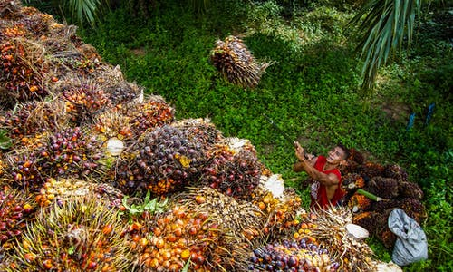Indonesia allocates US$195 million subsidy on palm biodiesel producers over smallholders