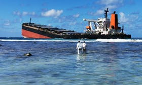 Mauritius oil spill: How coral reefs, mangroves and seagrass could be affected