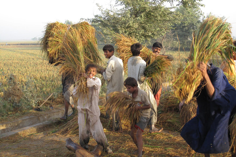 Tenant farmers Pakistan