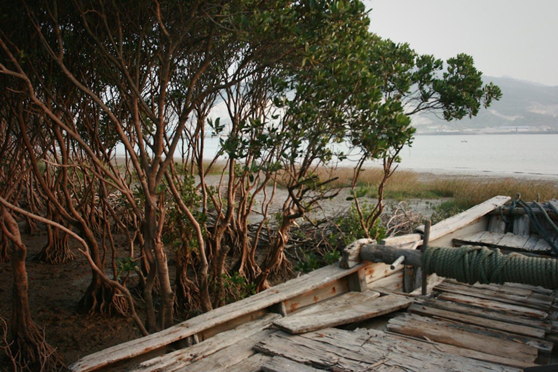 mangroves china