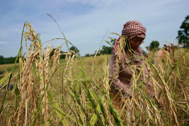 cambodia drought