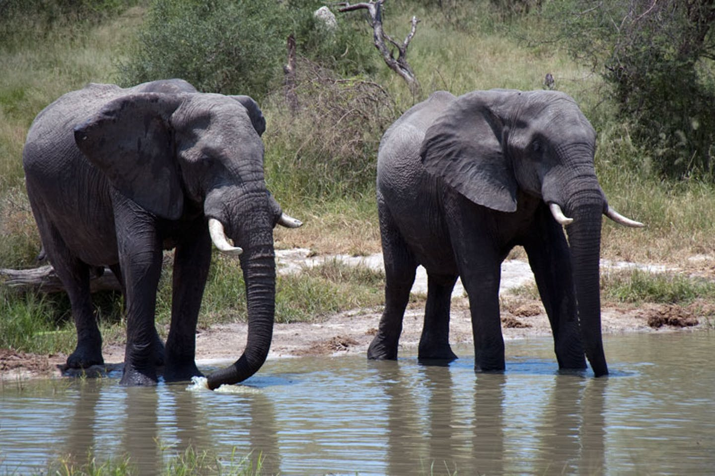 Elephants in Botswana, South Africa