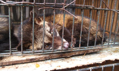 Coronavirus has finally made us recognise the illegal wildlife trade is a public health issue