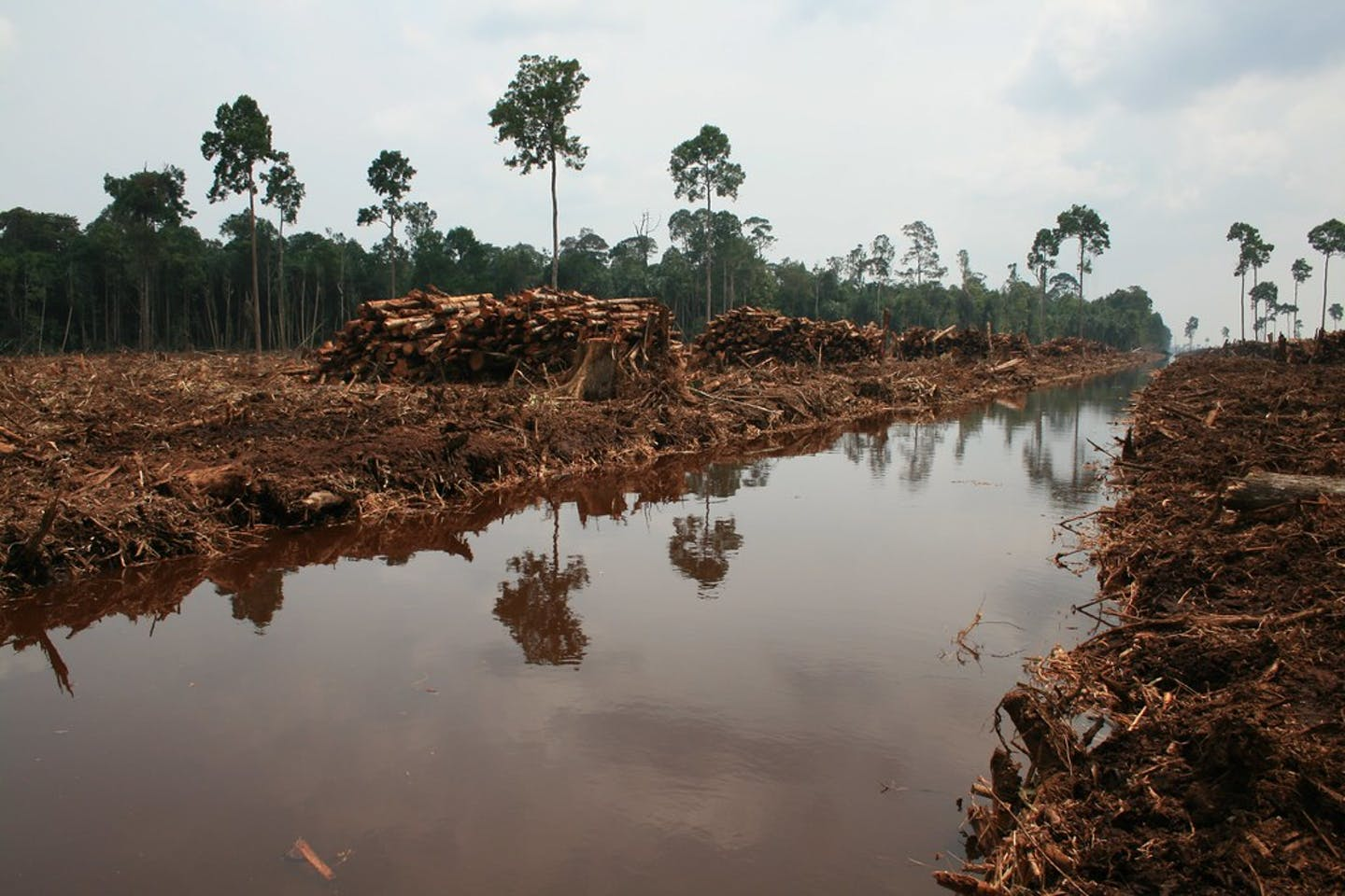 Deforestation Indonesia2