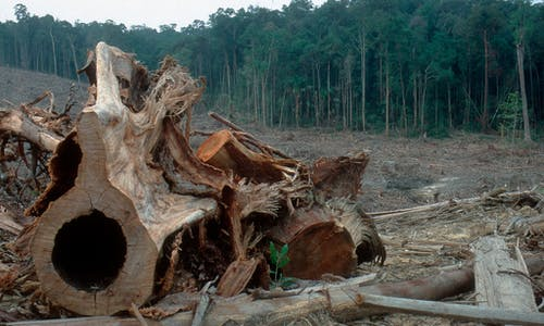 Rich world's demands fell poorer world's forests