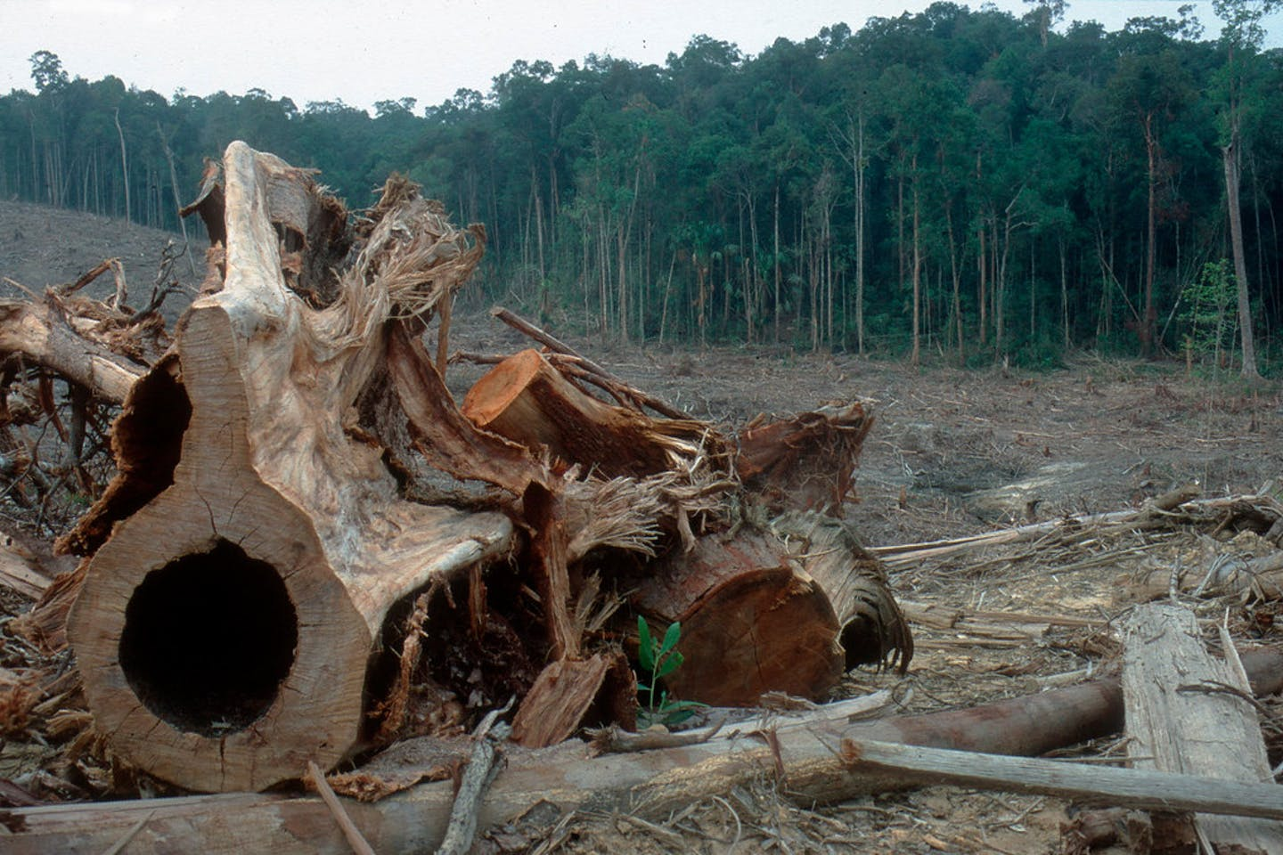 deforestation indonesia3a