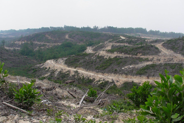 rainforest deforestation riau indonesia
