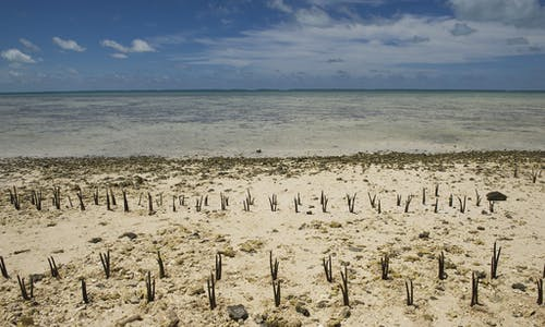 Rugby stars are losing their Pacific islands