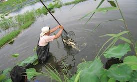 Coronavirus hits sustainable aquaculture