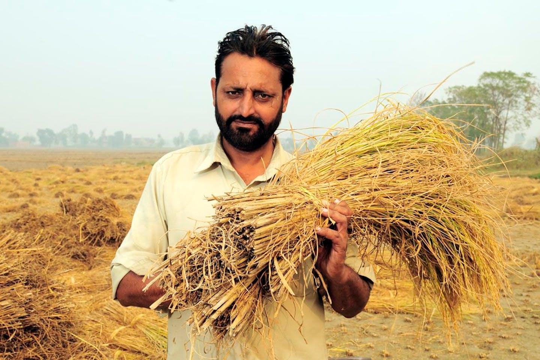 rice farmer india