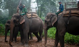 Nepal elephant ride operators illegally selling animals to India