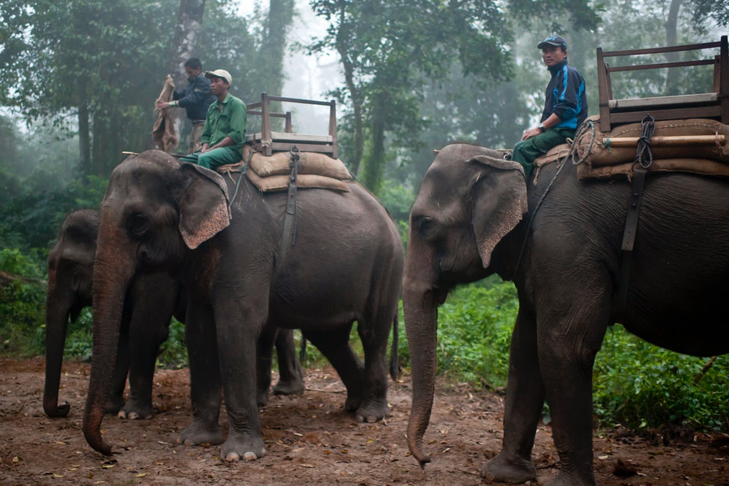 Elephant caretakers Nepal