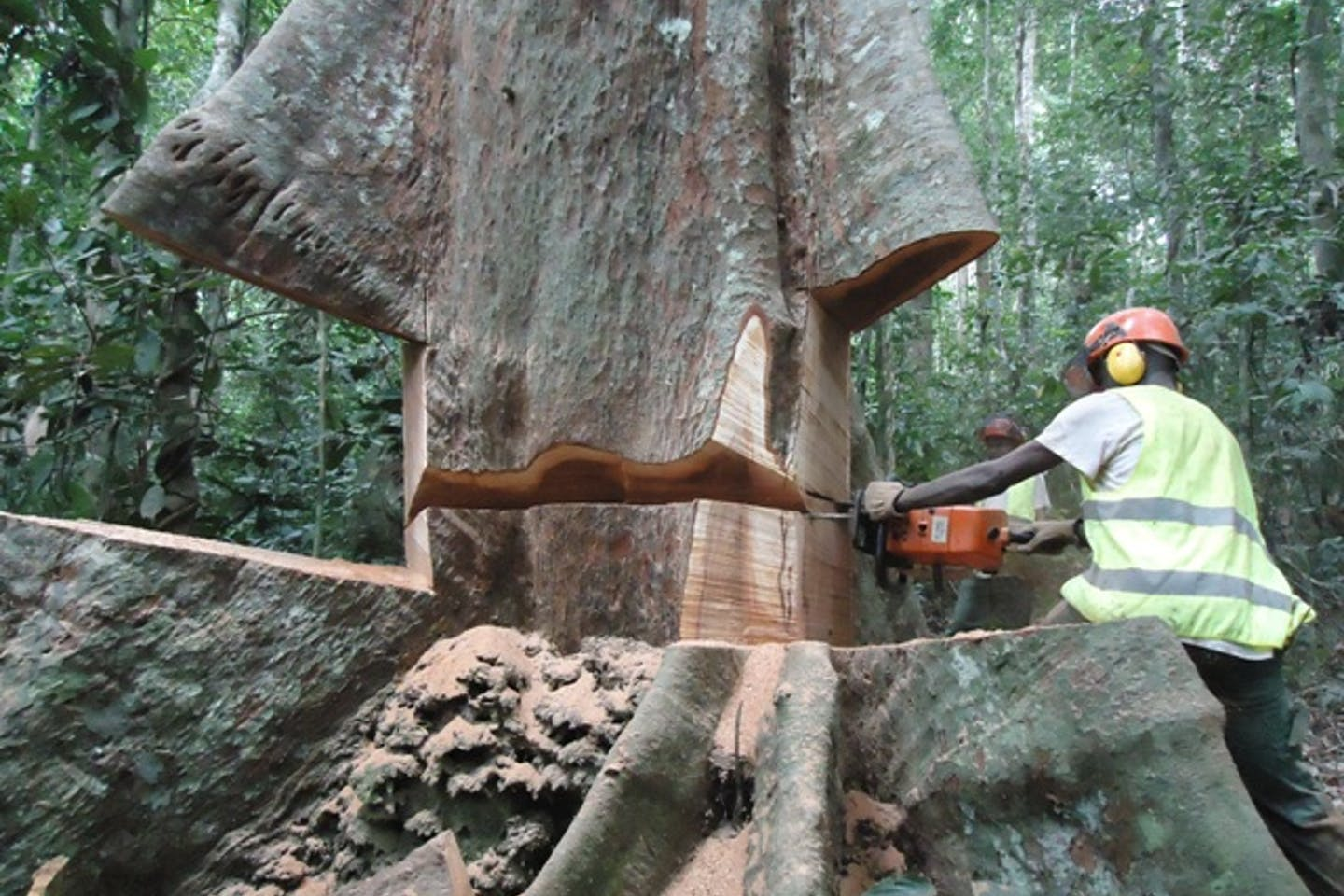 A man cuts timber with power saw.
