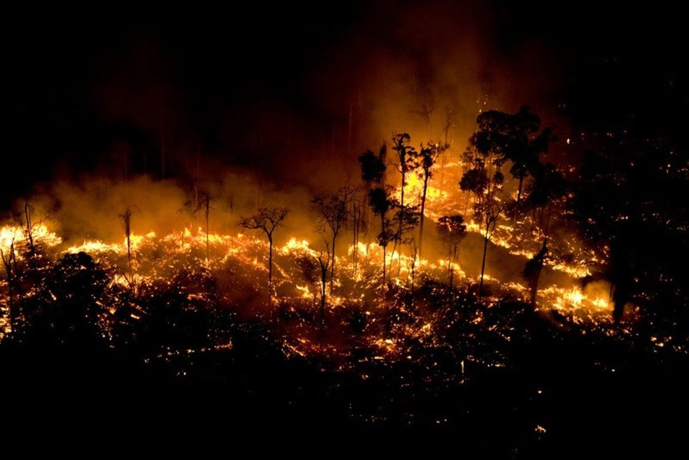 forest fire burning amazon