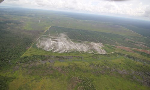 Deforestation from palm oil falls to three-year low