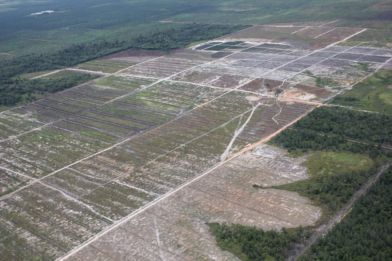 Deforestation for a palm oil plantation in Central Kalimantan, Indonesia