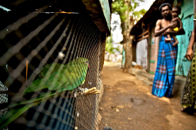 Sri Lankan refugee camp in India