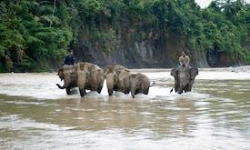 Paper giant APP's Sumatran road project ploughs through elephant habitat