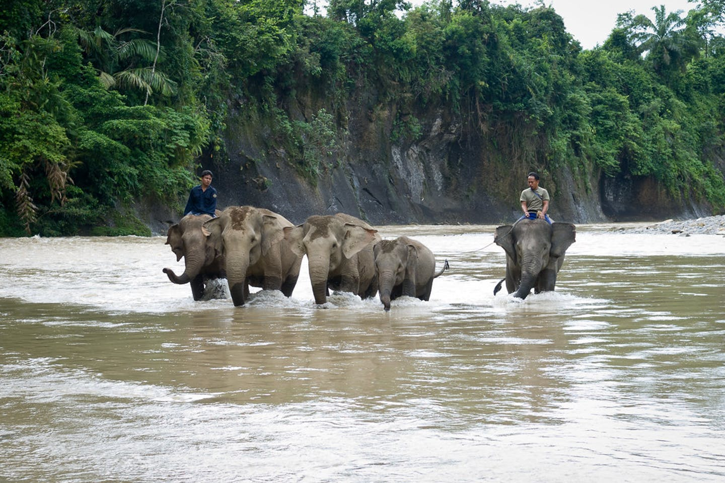 Elephants in southern Sumatra, Indonesia