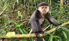 Discovery of threatened species pushes bid to protect Vietnam forest