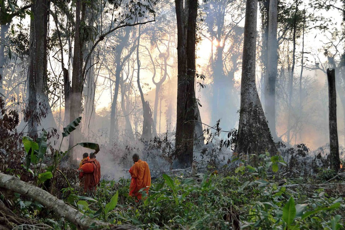 Buddhist monks in Angkor Wat Cambodia forest