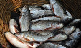 Protect fish to increase catches—and cut carbon