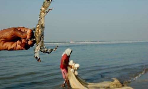 Coronavirus destroys Bangladesh's crab exports