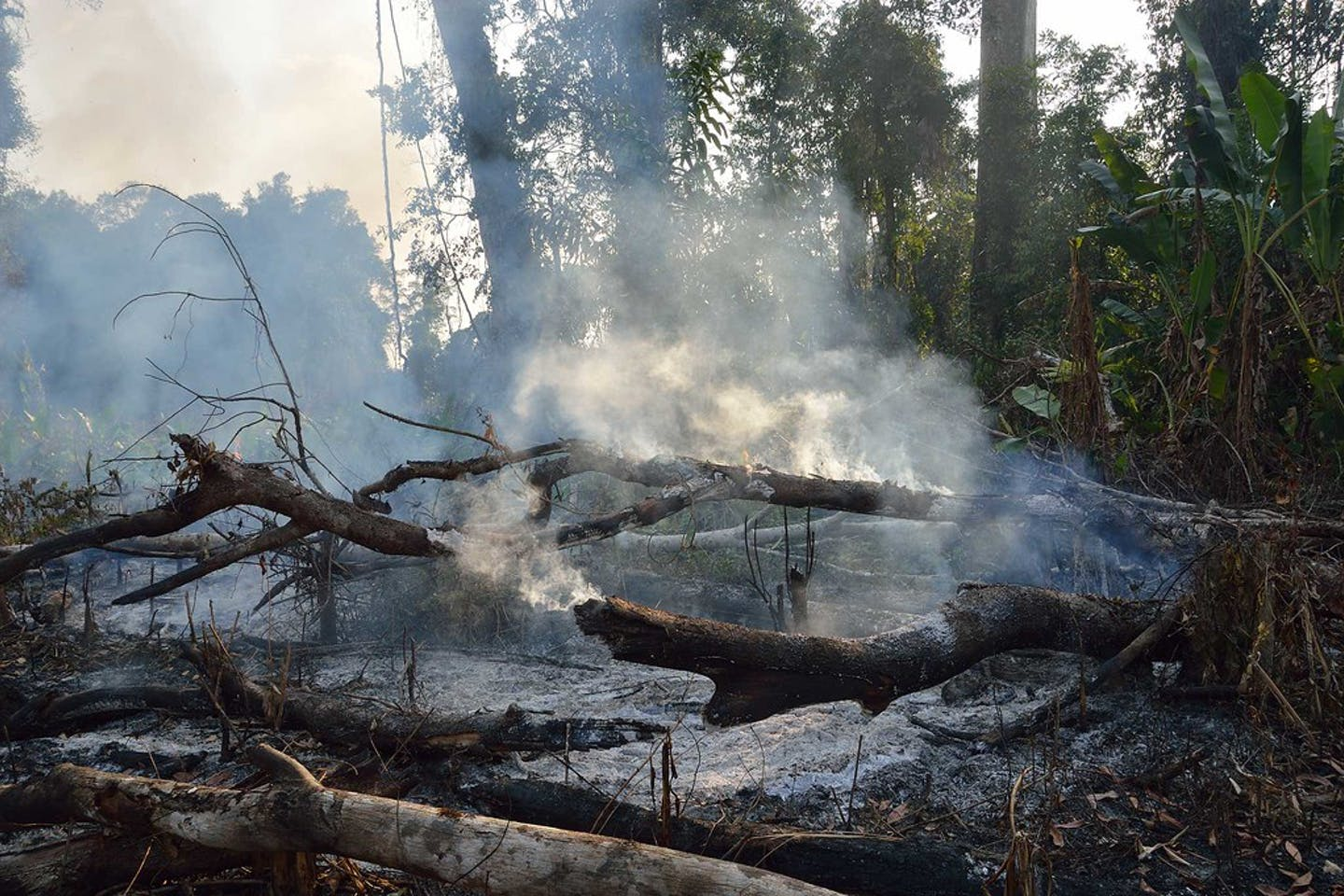 cambodia rainforest on fire