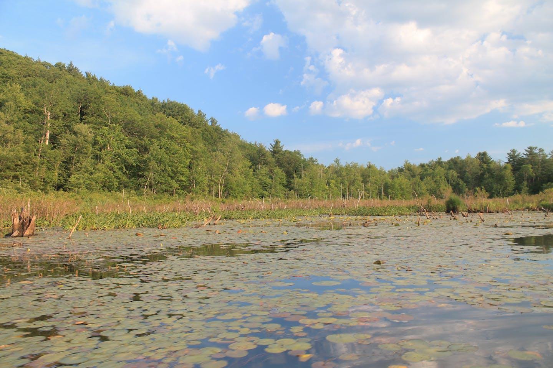 Natural Capital wetland