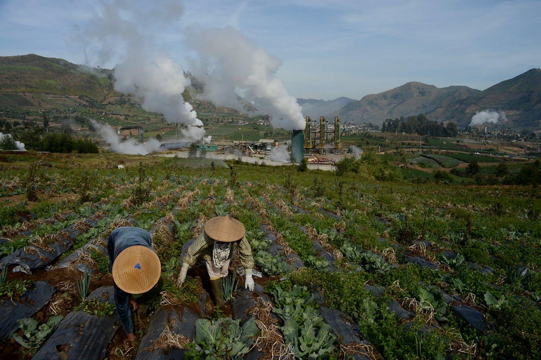 potato farm near geothermal plant indonesia