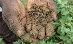 Agriculture doesn't have to be the villain: regenerative farming can save our soils