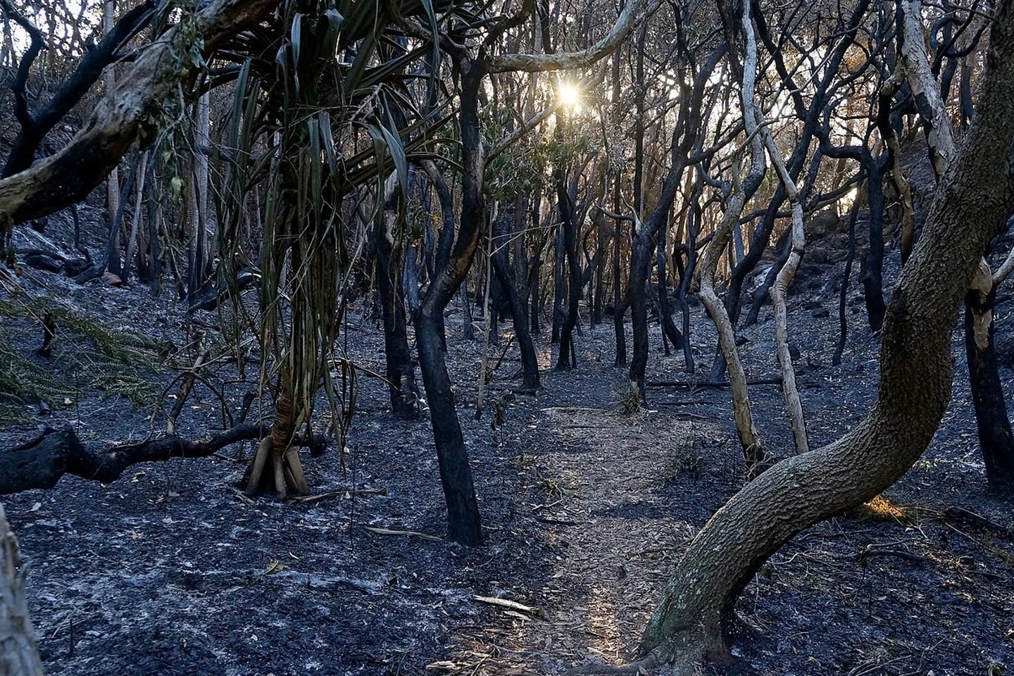 Burned forest, Australia