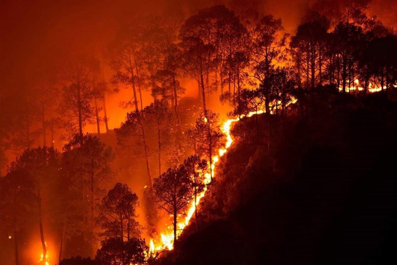 Bandipur wildfire India