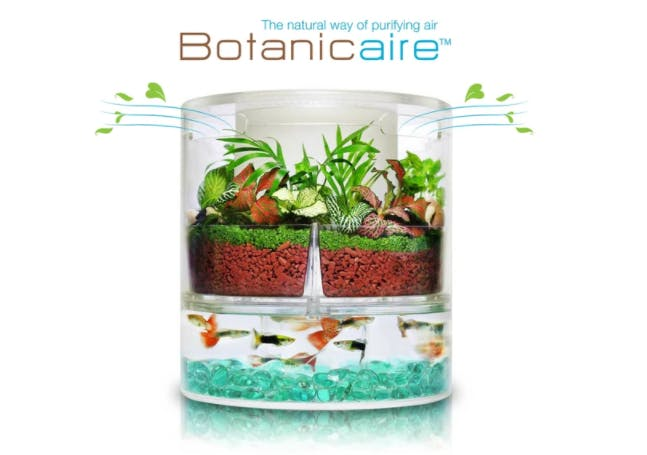 Botanicaire