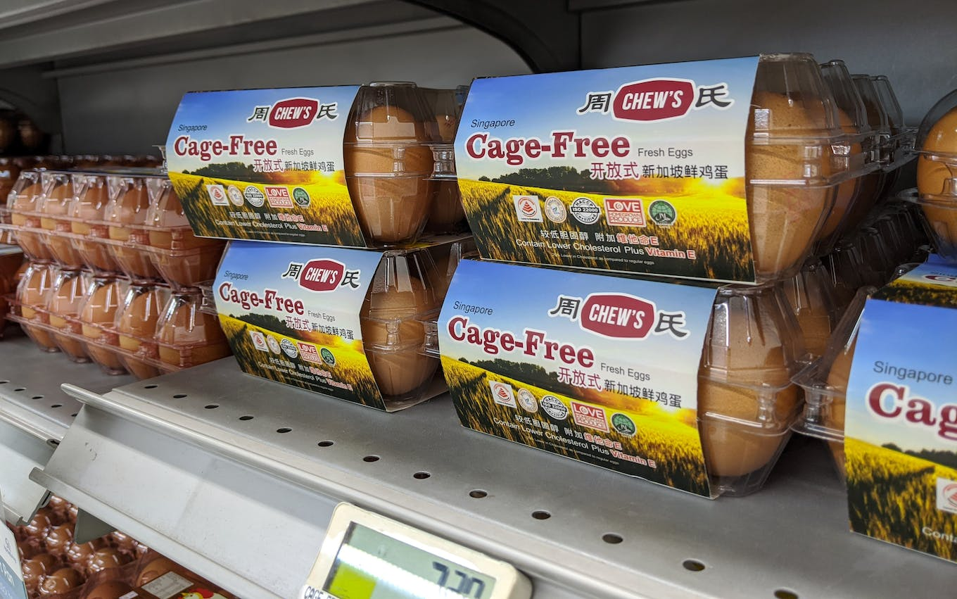 cage free eggs supermarket