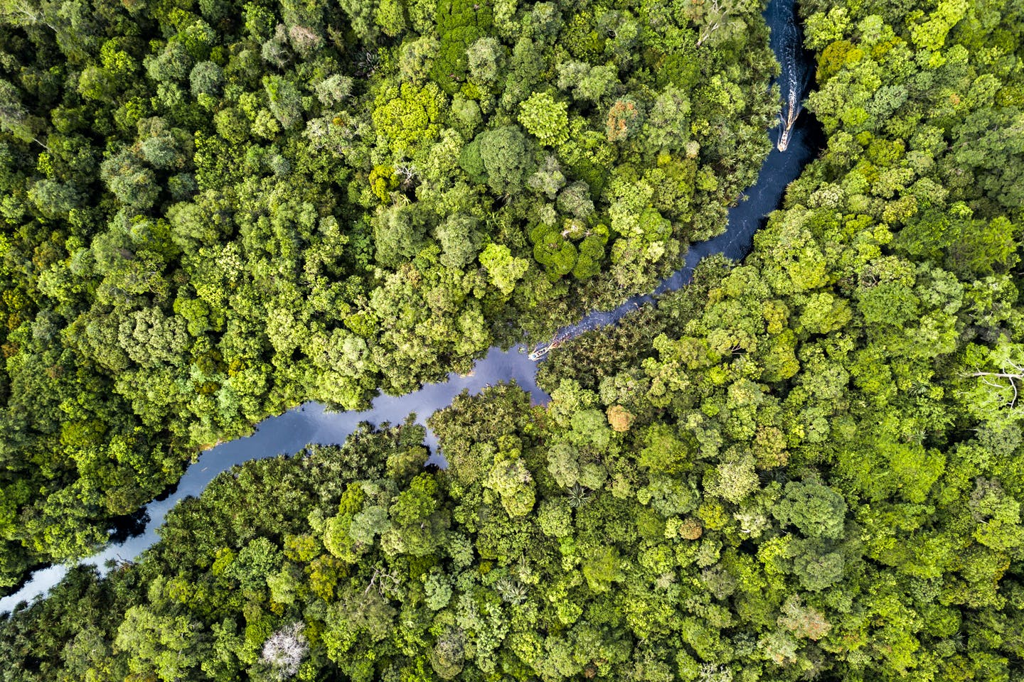 An aerial view of a river in Riau Province where APRIL is restoring 150,000 ha of degraded peat forest