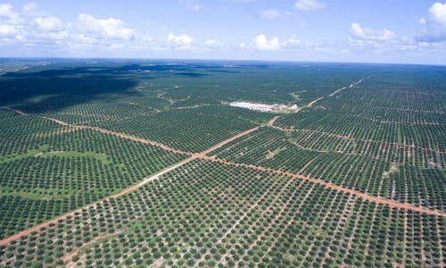 South Korean trading giant to compensate for past deforestation in Papua
