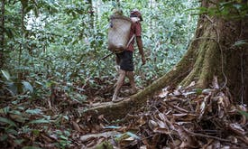 After a 40-year struggle, indigenous guardians of Indonesian forest gain rights over their land