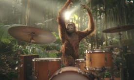 Australian confectioner declares it's palm oil-free with ad featuring orangutan playing drums, switches to sunflower oil