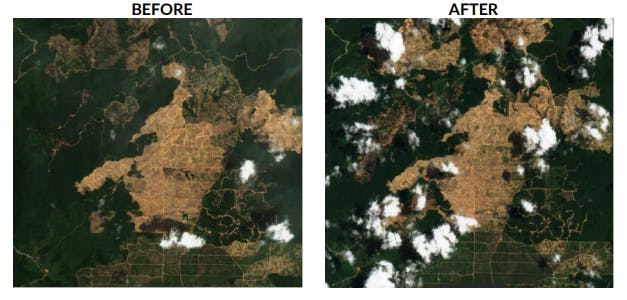 Images of Sulaidy owned plantation PT Borneo Citra Persada Mandiri demonstrating deforestation occurring over the course of 2020. Image: CRR