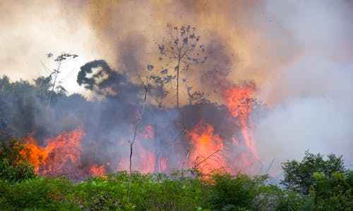 The Amazon is burning: 4 essential reads on Brazil's vanishing rainforest