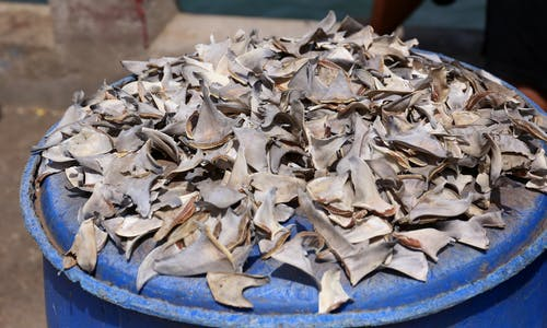 Efforts to tackle shark fin trade need to focus closer to shore: Study
