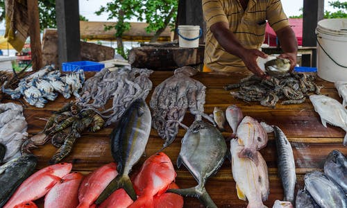 X-Press Pearl sinking puts a lens on seafood safety in Sri Lanka