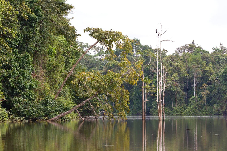 borneo indonesia rainforest