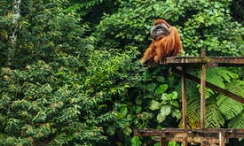 Is poaching in Indonesia's biodiverse Leuser Ecosystem on the rise amid Covid-19?