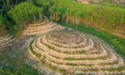 JPMorgan Chase expands deforestation policies under shareholder pressure