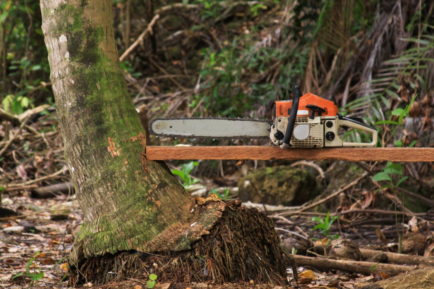 Chainsaw used to cut forests in Sumatra, Indonesia.