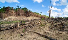 Scientists calculate trade-related 'deforestation footprint' of rich countries